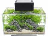 Fluval Edge Beleuchtung Verbessern Best Of Fluval Edge I intended for measurements 900 X 900