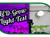 Led Grow Light Test Aussaat Jungpflanzenanzucht Zeitraffer throughout sizing 1575 X 890