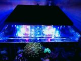 Meerwasseraquarium Led Beleuchtung Selber Bauen Inspirational Led in sizing 1280 X 720